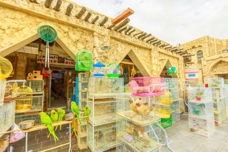 Doha, Qatar - February 19, 2019: many parrots, pet shop and cages at Bird Souq inside Souq Waqif, the old market and popular tourist attraction in Doha center, Middle East, Arabian Peninsula.