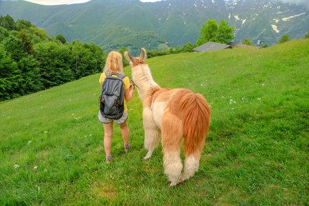 Woman trekking with llama alpaca on top of Comino mount in Switzerland. Centovalli location in Ticino canton. Top of cable car station: Verdasio-Monte Comino.