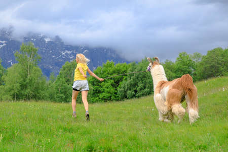 Woman running with llama alpaca on top of Comino mount in Switzerland at sunset. Centovalli valley in Ticino canton. Top of Verdasio-Monte Comino cable car station.