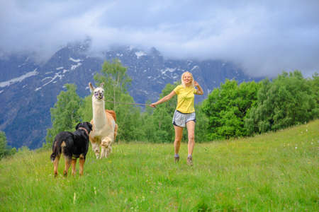 Woman running with llama alpaca and a dog on top of Comino mount in Switzerland. Centovalli valley in Ticino canton. Top of Verdasio-Monte Comino cable car station.