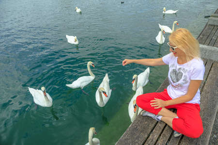 Blonde tourist girl playing with white swans in turquoise waters of Zurich Lake in Zurich city. Lakefront marina with people resting among nature and wild birds. Deutch Switzerland of Canton of Zurich