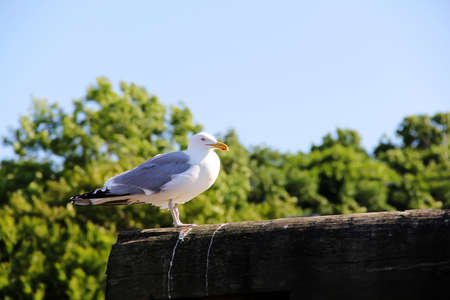Seagull on a poll in Ogunquit Maine