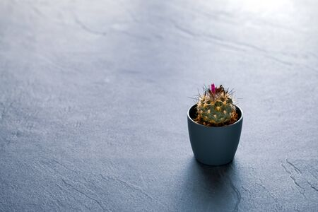 Garden: Cacti on black slate background Stock Photo