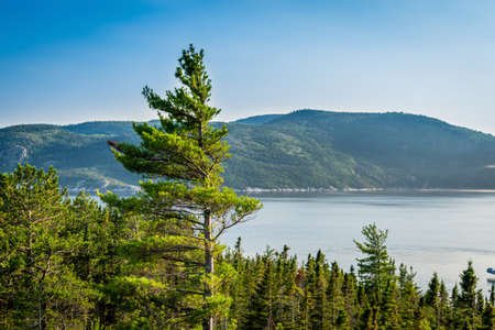 View on a fjord with a nice christmas tree in the foreground and mountains in the background. Tadoussac, Quebec, Canada