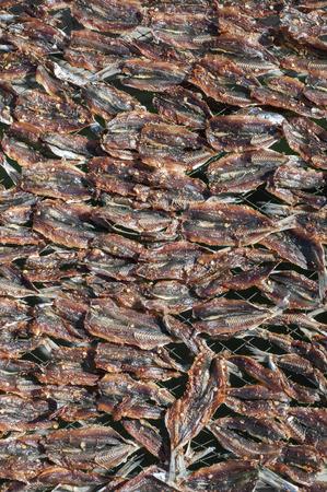 Sun drying fish for Vietnamese fish sauce