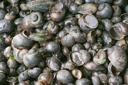 Ginataang Kuhol sea snails in the Philippines