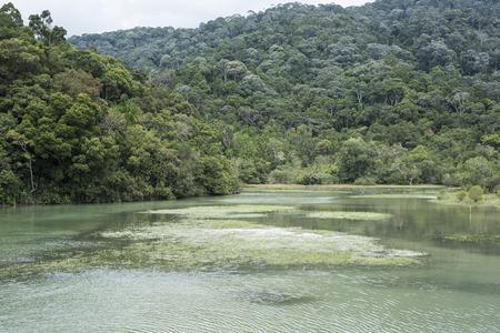 Meromictic lake in Penang, Malaysia.
