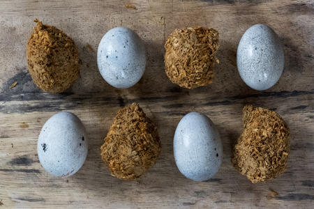 Two different sorts of century eggs on a wooden board 版權商用圖片 - 112492052
