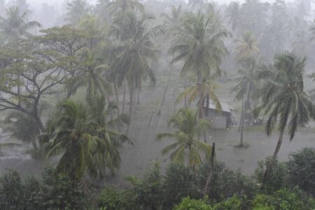 Rain and flooding on a small patch of land with coconut trees in Sri Lanka