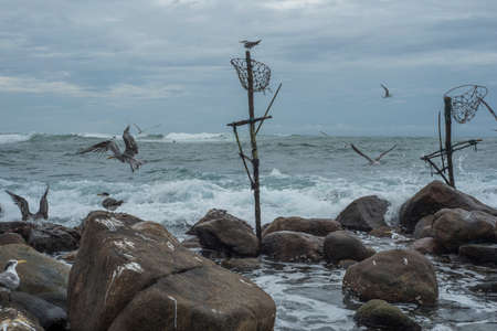 Abandoned traditional fishermen's poles with seagulls and large rocks with the sea in the background at Mirissa, Sri Lanka 版權商用圖片