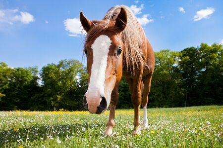 A pony looks curious Stock Photo