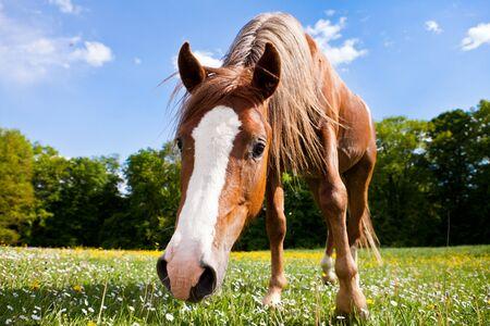 A pony looks curious photo
