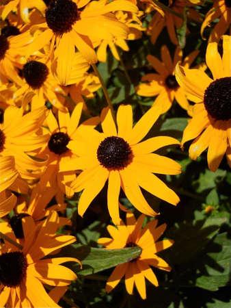 Summer Desert Flowers