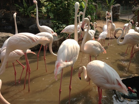 otganimalpets01: flamingo birds