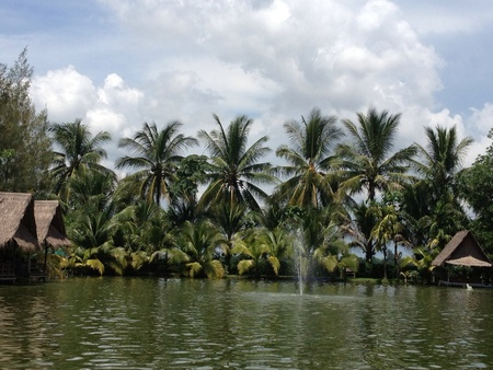 beside: A green water and a green coconut trees beside the pond.