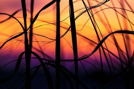 Sea Oat Sunset