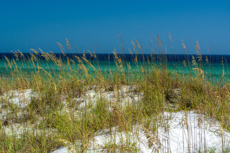 Sea Oats and the water at Pensacola Beach, FL Imagens