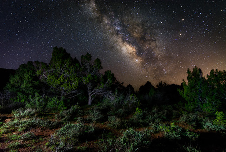 Milky Way galaxy rising over some trees in southern Utah