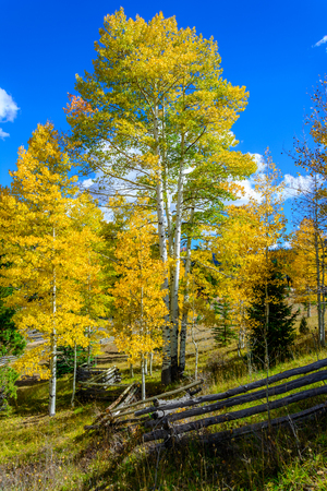 Fall colors in the mountains of southern Utah Imagens