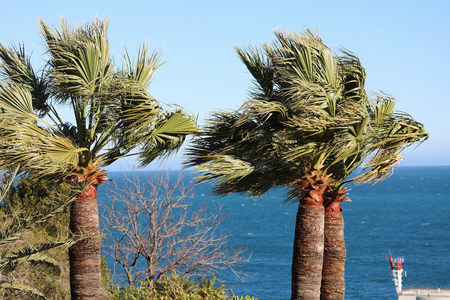 Palm Tree With Branches Moving In The Wind Against A Blue Sky And The Mediterranean Sea