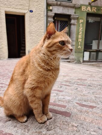 Beautiful Red Cat In A Typical French Street In An Old Village Of Provence In France. Close Up portrait Foto de archivo