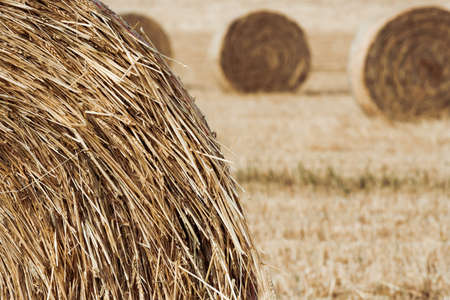 Close up of hay roll in field