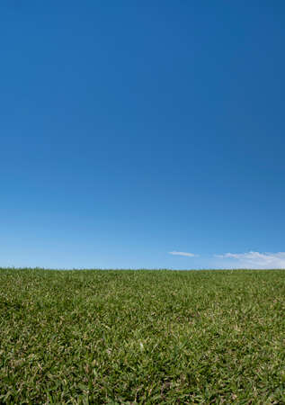 Close up of grass on a hill against a clear blue sky