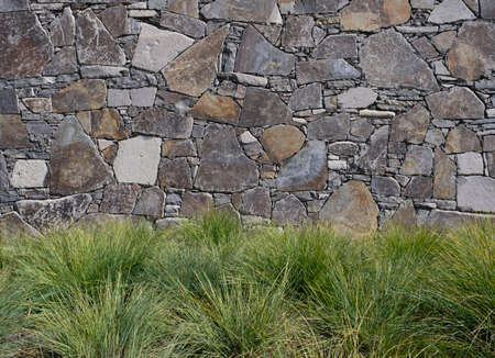 Mass planting of grasses in a landscape against a stone wall on a sunny day