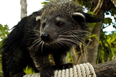 bearcat: Bearcat Stock Photo