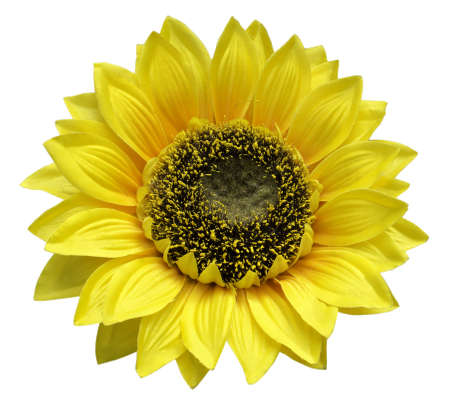 Artificial sun flower  isolated on white background Stock Photo - 19083886