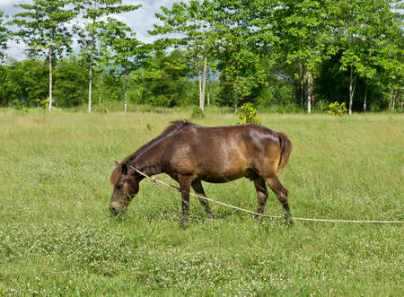 Horse eating at pasture meadow