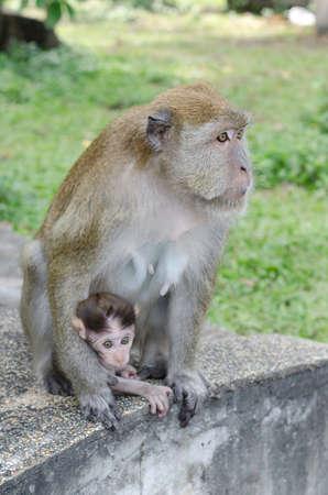 b�b� singe: Baby Monkey avec M�re