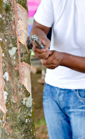 tapper: Rubber tapper apping latex from a rubber tree Stock Photo