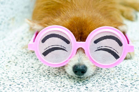 Cute puppy wearing funny glasses
