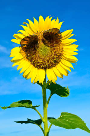 Smiley Sunflower wearing sunglasses under blue sky