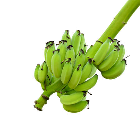 Bunches of green bananas on tree on white background Stock Photo