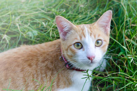 cute bi: Lovely cat staying in a tall grass