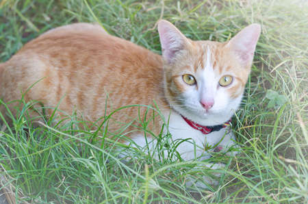 cute bi: Lovely cat laying in a tall grass
