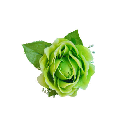 Green beautiful artificial rose flower isolated on white background with working path