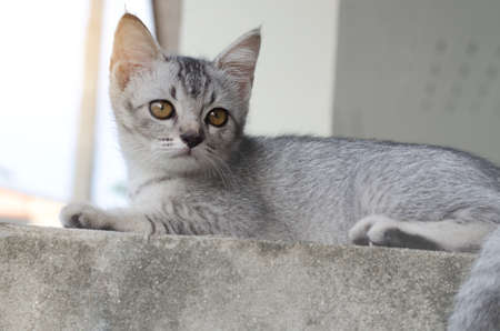 Lovely grey kitty laying on cement fence Stock Photo
