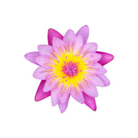 Pink water lily isolated on white background with working path