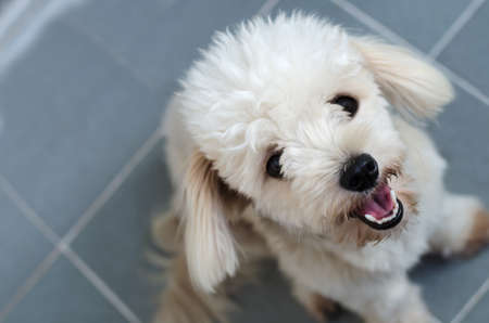 White cute mixed breed dog looking at the camera 스톡 콘텐츠
