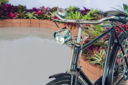 Old Rusty Bicycle is parked near Tillandsia plants