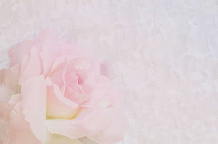soft focus of sweet color artificial rose over white lace background Standard-Bild