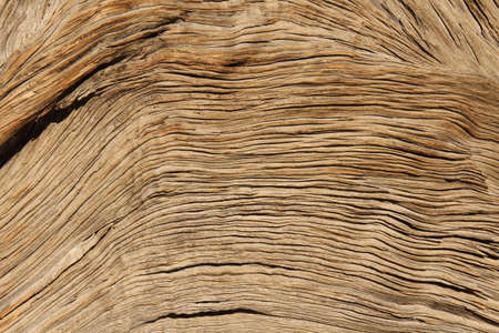 grooves: Lines of an old tree in the desert