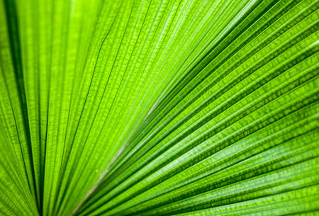 The close-up green leaf photo