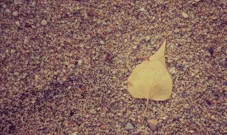 peepal tree: Yellow Pho leaf on ground.