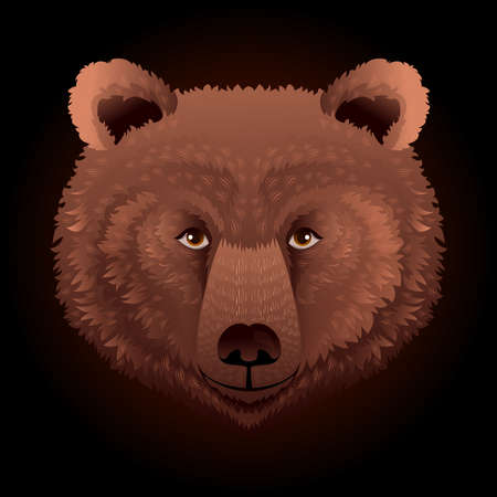 Bear wild animal face. Grizzly cute brown bear head portrait. Realistic fur portrait of brown large bear isolated on black background.