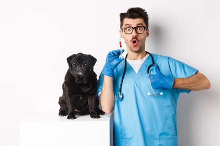 Handsome male doctor veterinarian holding syringe and standing near cute black pug, vaccinating dog, white background