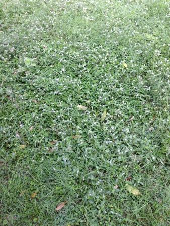 gramineas: Hierbas verdes verdes Foto de archivo